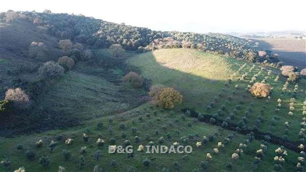 terreno agricolo vendita grosseto